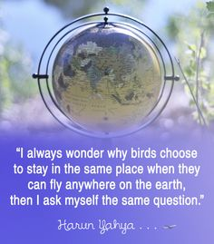 """""""I always wonder why birds choose to stay in the same place when they can fly anywhere on the earth, then I ask myself the same question."""" ― Harun Yahya"""