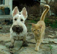 Como siempre sr. gato muy limpio y dog siempre hace el trabajo sucio