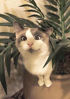 Katten kunnen niet zien wat er recht onder hun neus staat
