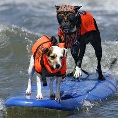 top 10 dog friendly beaches. ~ Check this out too ~ RollTideWarEagle.com sports stories that inform and entertain plus FREE Train Deck to learn the rules of the game you love, #CollegeFootball #Orange #Blue