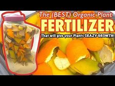 Make Your Own, Make It Yourself, How To Make, Orange Peels Uses, Fertilizer For Plants, Green Plants, Simple Way, Fresh Fruit, Cooking Recipes