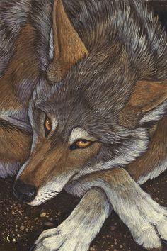 ✯ Canis Rufus :: Artist Christy Grandjean ✯