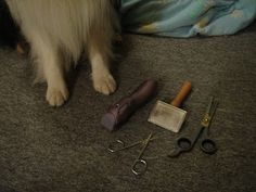 Life is Better with Sheltie Hair: Grooming Those Sheltie Feet