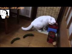 It's Just A Pickle -- This is a funny video of cats that get freaked out when they discover they are being stalked by a cucumber.  If you want to have a little fun, put a cucumber on the floor behind your cat when they are eating.  It's all good until someone get poked in the eye with a pickle.