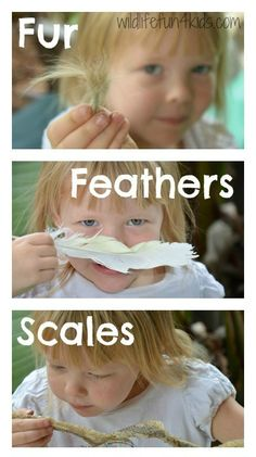 Teach your child the basics of animal classification with fur, feathers and scales activities