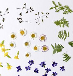 Arts And Crafts, Flower Preservation, Flowers, Press Flowers, Plant Parts, Dried Flowers, Wonderful Flowers, Keepsakes, Art And Craft