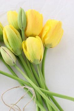 Yellow tulips, my favorite!