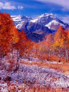 Utah Mountains in the fall | Fall Aspen Trees and Early Snow, Timpanogos, Wasatch Mountains, Utah ...