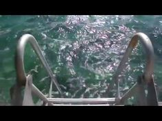 Vakantiehuis Jan Thiel Boca Gentil | Exclusieve villa met steiger. huren