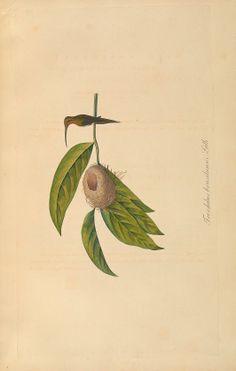 Abbildungen zur Naturgeschichte Brasiliens / - Biodiversity Heritage Library