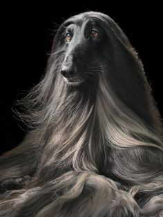 Pictures: Tim Flach's 'Dogs' book | Metro UK