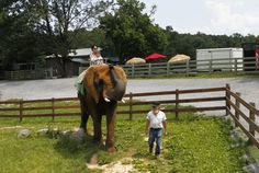 Mogensen: Animal-rights groups trick the public about Natural Bridge Zoo