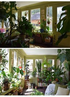Apartment Therapy: Natasha and the Plant-Filled Sunroom
