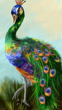 10 Winners from the Peacock Drawing Challenge - Create + Discover with PicsArt Peacock Artwork, Peacock Painting, Peacock Decor, Pfau Tattoo, Peacock Pictures, Muse Art, Drawing Challenge, Bird Drawings, Cute Birds