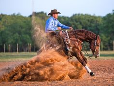 Clinton Anderson Performance Horses