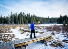 The Beaver Boardwalk in Hinton, Alberta links up with an extensive network of hiking, cross-country and snowshoe trails
