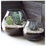 MyGift Lot de 2vases décoratifs modernes en verre rond transparent pour plantes ou pour créer un terrarium