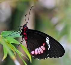 Butterfly Photography by Ali Hussein-AmO Images-AmO Images