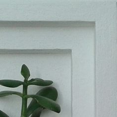 Wall planters, living wall, essential