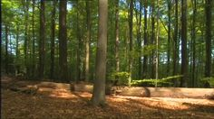 steigerwald Bayern | Steigerwald, Deciduous Forest, Stem, Breeze, Shadow, Non…