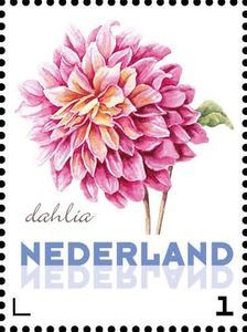 Issued in 2016, Nederland - Dhalia