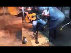 Everyone passed by this busker. But a group of four little kittens made his day...  | See more fun videos here: http://gwyl.io/