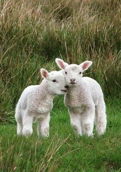 A shy girl that loves animals and nature Cute Creatures, Beautiful Creatures, Animals Beautiful, Cute Baby Animals, Farm Animals, Animals And Pets, Baby Sheep, Baby Lamb, Tier Fotos