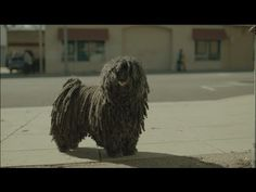 Touching Commercial Shows Homeless Mop Dog Meeting A New Friend