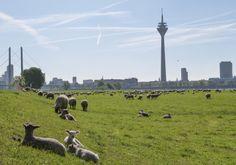 Greetings from Dusseldorf by beyond REAL ESTATE // Grüße aus Düsseldorf von beyond REAL ESTATE