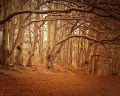 Hiawatha's Childhood- golden brown and orange forest scene
