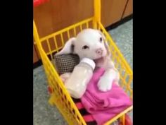 The secret life of pets - milk - cute puppy