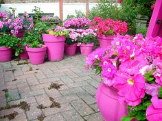 Love the hot pink pots on the brick