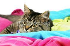 Happy cat resting Royalty Free Stock Photo