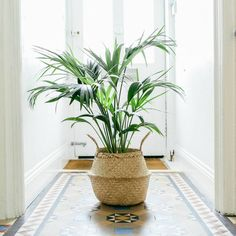 Seagrass belly basket natural with plant