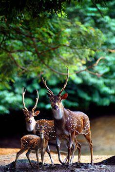 ~~ deer ~~ oh, deer ~~