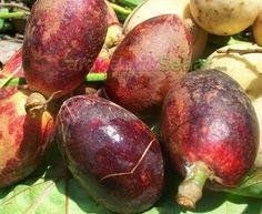 berikut ini adalah manfaat buah matoa yang perlu kamu ketahui