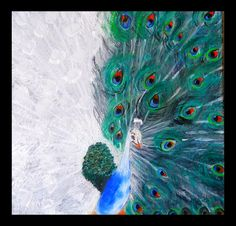 peacock, two colours