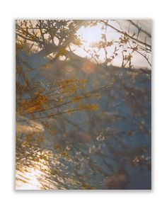between the branches: ready to hang photo by FieldsOfAphelion (Art & Collectibles, Photography, Color, ready to hang photo, large wall art, vintage style, dreamy photography, abstract photography, nature photography, bokeh photography, spring flower decor, springtime photo, nursery decor, pittsburgh art river, 11x14 16x20 24x30, 24x30 canvas wrap)