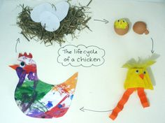 chicken life cycle craft for kids - Google Search