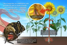 Neonicotinoids and pyrethroids