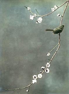 blossom and birds Love Birds, Beautiful Birds, Beautiful Things, Art Asiatique, Foto Art, Bird Art, Bird Feathers, Belle Photo, Asian Art