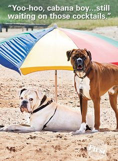 These two monsters would definitely fit into my family!  Beach bum boxers. #boxerfun