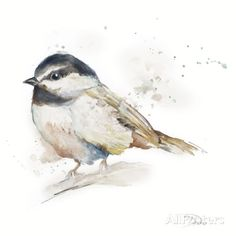 Watercolor Mountain Bird II Print by Patricia Pinto