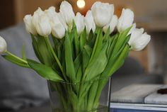 love the simplicity of white tulips Flowers For You, Fresh Flowers, White Tulips, White Flowers, Healthy Mind And Body, Calla Lillies, Simply Beautiful, Trees To Plant