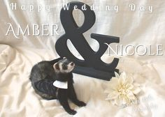 the-book-ferret:  So excited for my friends to get married today but so sad we couldn't be there! I made them this little message and thought I'd share it with you guys. Cause really, FERRET IN A TUX.