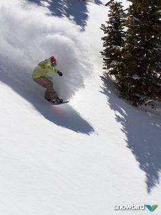 Speedy powder turn at Snowbird, Utah.