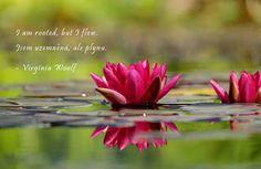 Meditace proti negativním myšlenkám a rovnováha živlů ~ Hadův týden