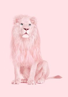 Albino Lion Print by Paul Fuentes Pink Love, Pretty In Pink, Paul Fuentes, Pop Art, Tout Rose, Arte Pop, Everything Pink, Albino, Pink Walls