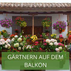 Die 64 Besten Bilder Von Gartnern Auf Dem Balkon In 2019