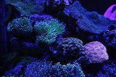 Tom Zielinski (TMZ) Reef Puddle